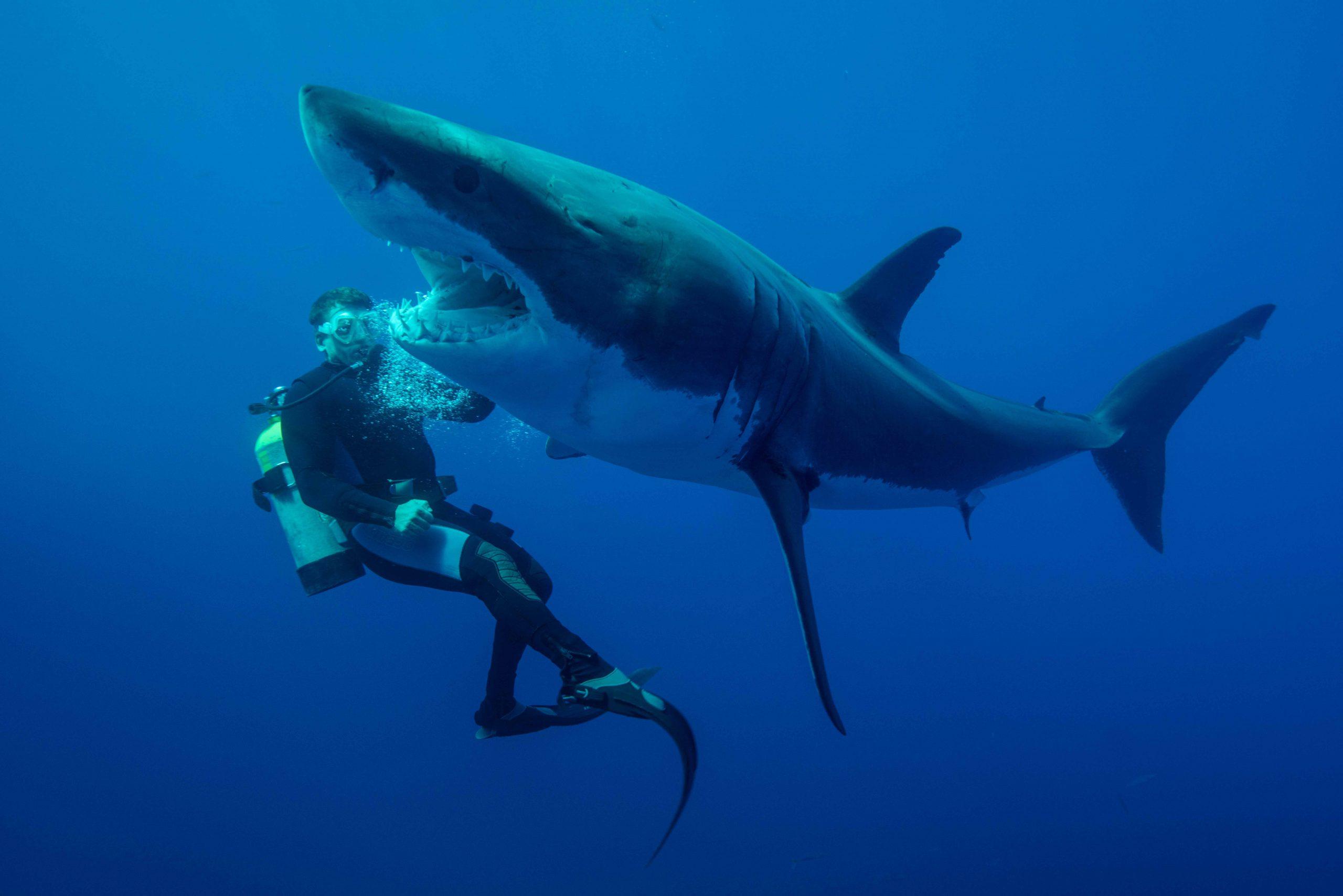 www.shark-revolution.com (Photos : Jean-Marie Ghislain)