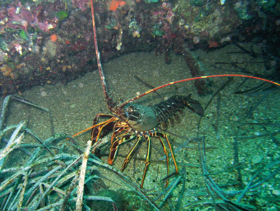 Les enjeux de l'acidification des océans